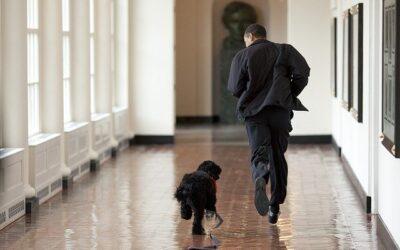Creating a Pet Trust