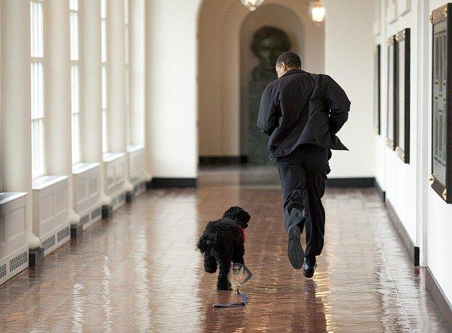 Barack Obama and Bo